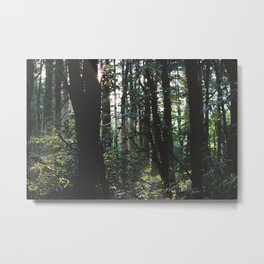 Forest Trail XIV Metal Print