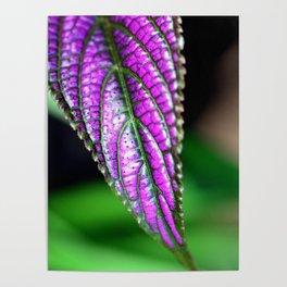 Jurassic Purple Poster