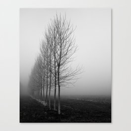 Tree line and fog Canvas Print