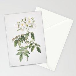 Vintage Blooming Musk Rose Illustration Stationery Cards