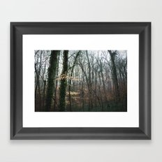 Dahlonega Woods II Framed Art Print