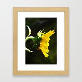 Summertime Sunflower Framed Art Print