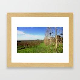 Grapevines  Framed Art Print