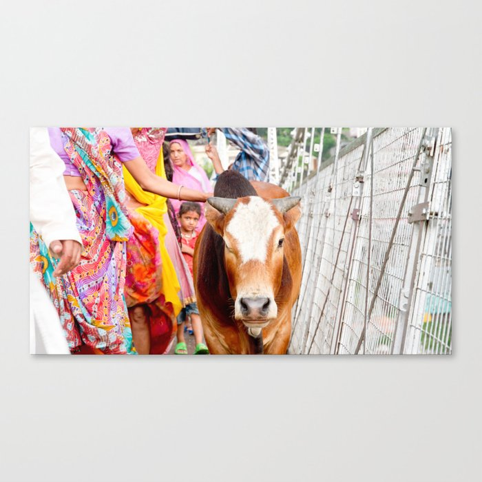 Holy cow, India Canvas Print