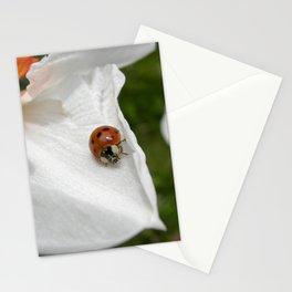 ladybug macro XVI Stationery Cards