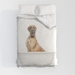 Great Dane in Vintage Bathtub Comforters