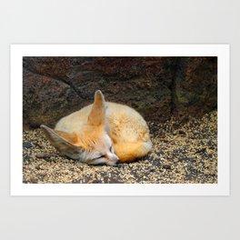 Time to Sleep Little Fennec Fox Art Print