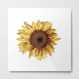 Lone Sunflower Metal Print