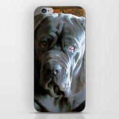 My dog Ovelix! iPhone & iPod Skin