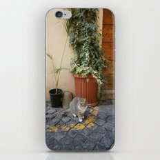 roman cat iPhone & iPod Skin