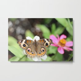 Beautiful Buckeye Butterfly Metal Print