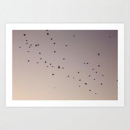 pastel birding Art Print