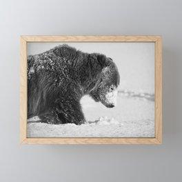 Alaskan Grizzly Bear in Snow, B & W - I Framed Mini Art Print