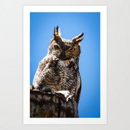 Desert Elf Owl #1 Art Print