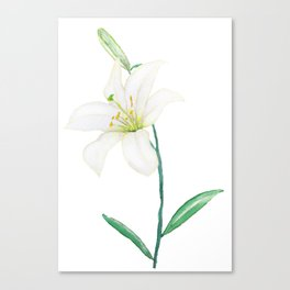white lily watercolor Canvas Print