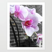 Pink; orchid Art Print