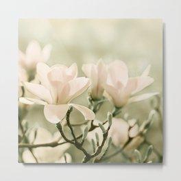 Magnolia 011 Metal Print