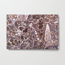 fossil turritella Metal Print