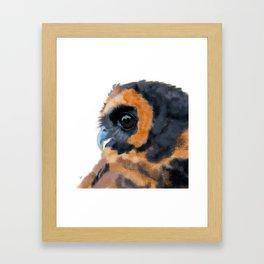 Brown Wood Owl (on white) Framed Art Print