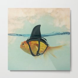 Goldfish with a Shark Fin Metal Print