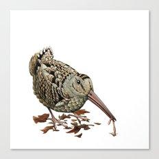 American Woodcock Canvas Print
