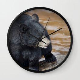 Black Bear (Ursus americans) near water Wall Clock