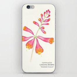 Botanical Sketches 1: Trumpet Honeysuckle iPhone Skin