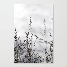 Grey Grasses Canvas Print