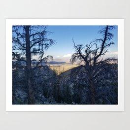 Ancient Bristlecone Pine Forest #1 Art Print