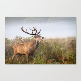 Rutting - Richmond Park Canvas Print