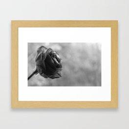 Winter rose Framed Art Print