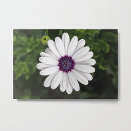 Flower Portriat - Purple Power Metal Print