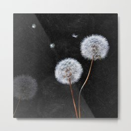Black Dandelion Metal Print