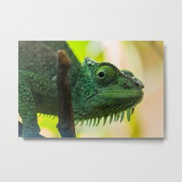 Up Close and Personal with a Chameleon Metal Print