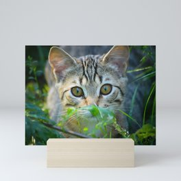 Domestic Shorthair Cat Peering at You Mini Art Print