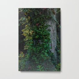 Ivy upon the Tree (Color) Metal Print