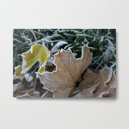 Frost on the Maple leaf Metal Print