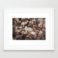 cherry blossom Framed Art Prints featuring Cherry Blossom by Evan Dalen