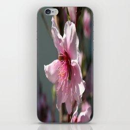 Close Up of Peach Tree Blossom iPhone Skin