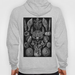 Ernst Haeckel Cirripedia Barnacles Crabs Hoody
