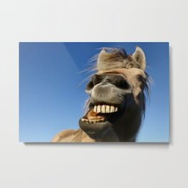 Happy Horse Photography Print Metal Print