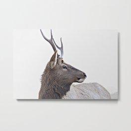 elk #society6 #decor #buyart Metal Print