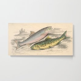 Vintage River Trout Illustration (1866) Metal Print
