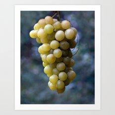 Harvest time ... 8508 Art Print
