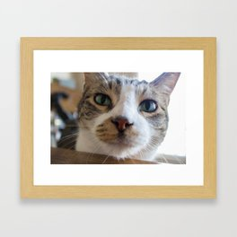 Kiko the Cat Framed Art Print