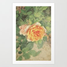 A rose in it's prime Art Print
