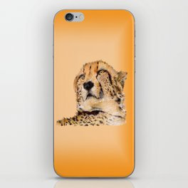 Season of the Big Cat - Cheetah at Rest iPhone Skin