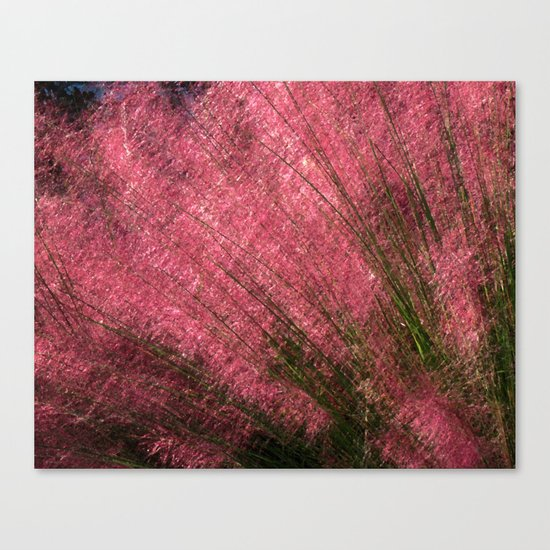 Pink Sweetgrass Canvas Print