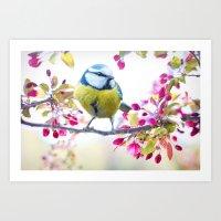Romantic Flower Blossom with blue tit spring bird Art Print