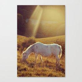 Pony grazing Canvas Print